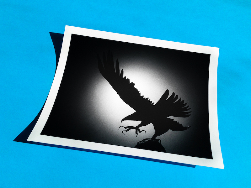 Photograph of a hand printed photograph of a bird of prey